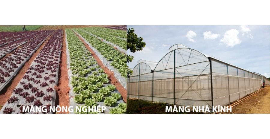 Báo giá cuộn màng PE quấn tay, màng nhà kính, màng nông nghiệp